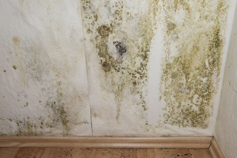 Drywall with mold damage
